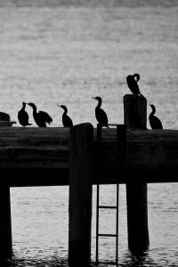 Coast silhouette