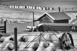 Farm in Infrared