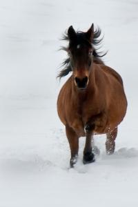 Horse running copy