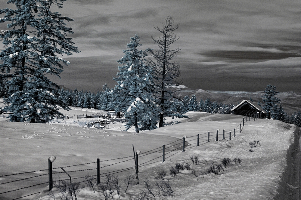 Infrared Photography on a winter day            (2/3)