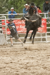 Maybe this is why they call bull riding dangerous. Ya wouldn't this that big fell could jump that high.