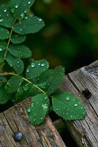 Deep green & Rain