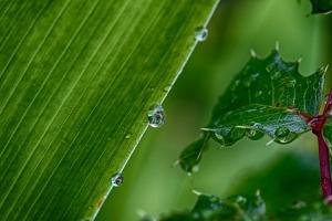 Green rain drops