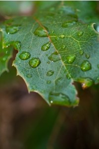 Wet green leaf