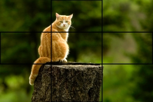 Cat & Rule of Thirds