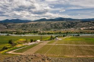 Harper Trail vinyard