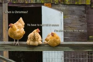 xmas chickens