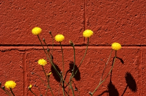 Still life in Red & Yellow
