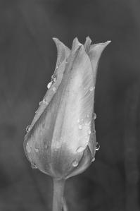 5. Flower