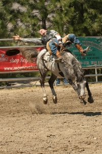 Horse 1 cowboy ?