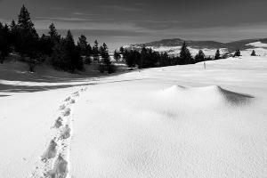 Tracks-2-