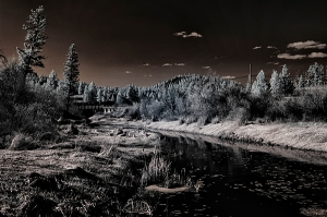 Monty Creek