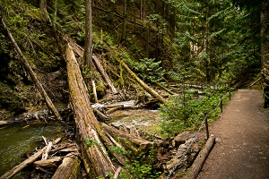 Reinecker Creek