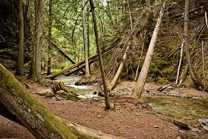 Fallen Cedars by Linda