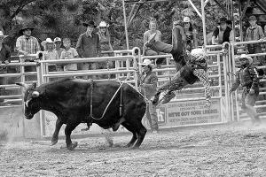Bull wins