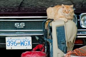 c. Cat & Car