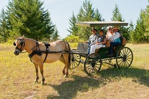 Wedding ride 2