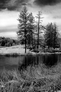 Falis Pond 2
