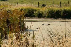 Ducks Falis Pond 2015