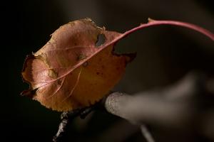 Pink leaf 6