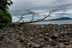 Coastal tree view