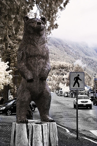 bear crossing 1
