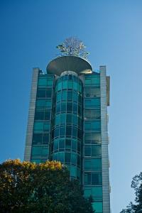 9-tree-top