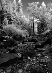 stream-bed