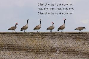 xmas-geese