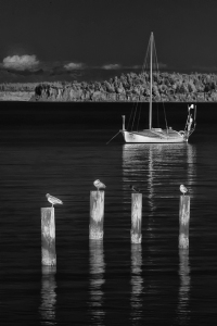 seagulls-and-boat-2