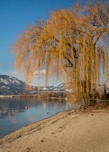 waters-edge-tree