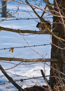february-watcher