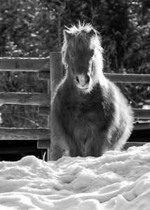 ponys-winter-coat